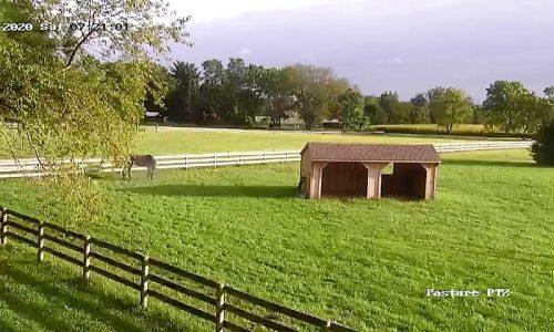 Pasture Cam_01_20200912081916238